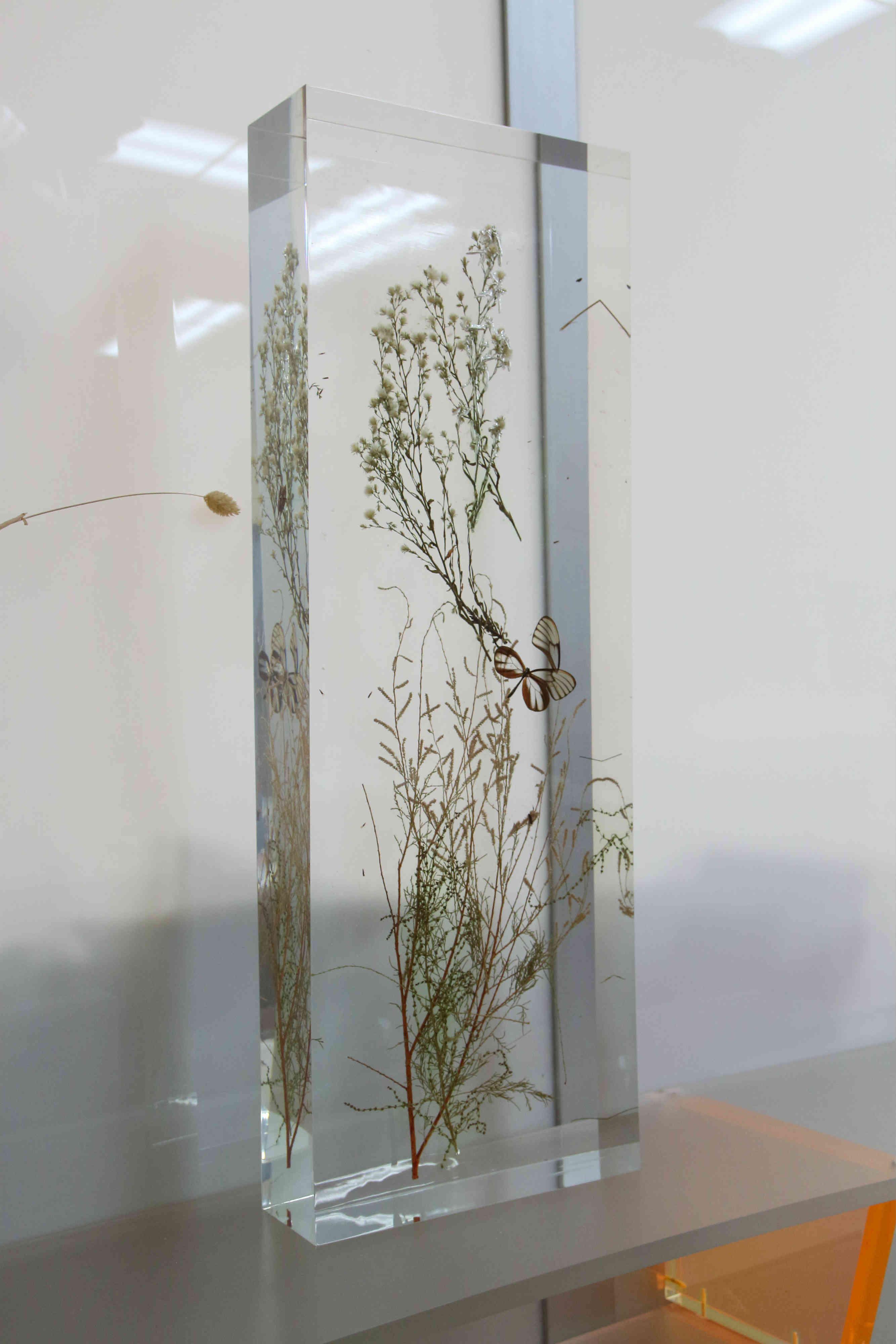 Pianta Inglobata Plexiglass